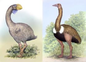 Dromornis and Aepyornis by WillemSvdMerwe