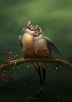 Lovebirds by sandara