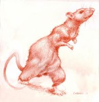 Ratita Little Rat by susanavillegas