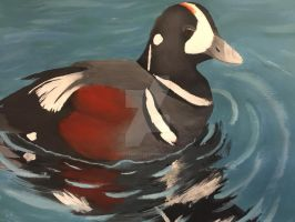 Duck Stamp 2017