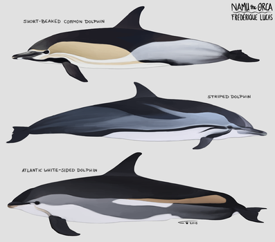 Menu dolphin friends by namu-the-orca