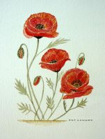 Poppies by Pat Coward by newboldworld