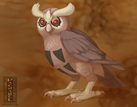 (1 hr) Warm Up 164 - Noctowl by Pachabel