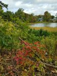Shakespeare Pond by GUDRUN355