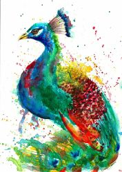 Peacock Low1 by astridbrisson