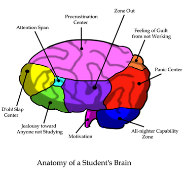 Anatomy of a student's brain by -pi-