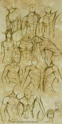 +MALE BODY STUDY I+ by jinx-star