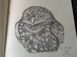 daily drawing challenge day 38: owl by Chayt