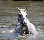 Horseys River 178 by aussiegal7