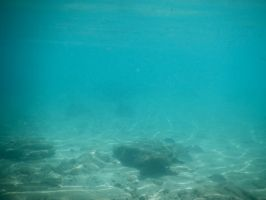 Bermuda 068  Underwater Stocks by FairieGoodMother