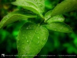 Leaves after rain by MrHighsky