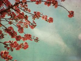 somewhere over the spring. by Krapfen