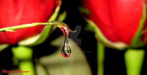 Droplet_4 by Mixdown13