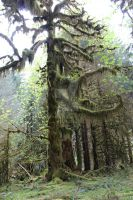 Hoh tree hanging moss by seancfinnigan