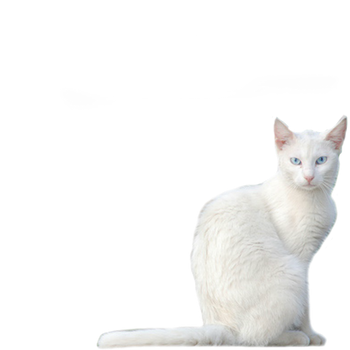 White Kitty PNG Stock by vamp1967