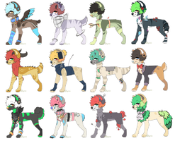 Set Price Canine Adopts *2/12 OPEN PRICE LOWERED* by FUDANSHl