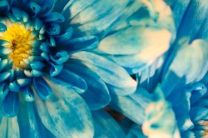 Blue Flower 1 by GustavoSugawara