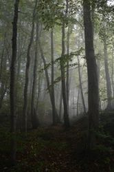 Foggy Forest 1 by SelvaStock