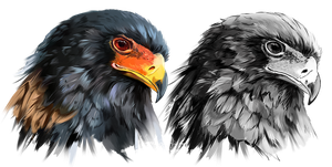 Eagle-buffoon Predator Bird by Kajenna