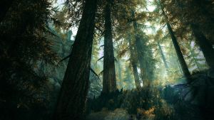 Deep in The Woods - Skyrim by WatchTheSkies45