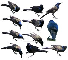Black Birds - Premium PNG File Downloads by Thy-Darkest-Hour