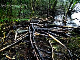 Driftwood by D1scipl31974