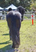 STOCK - Canungra Show 2012 093 by fillyrox