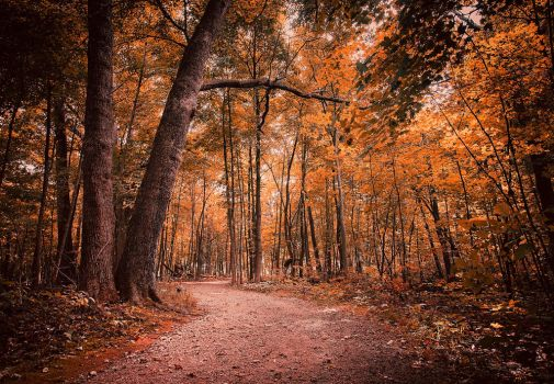 Lost in Autumn by AnthonyPresley