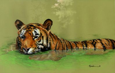 Tiger in jungle by marcgosselin