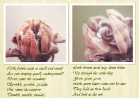 Hibiscus Seeds by kumArts