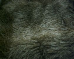Fur by Isis-stock