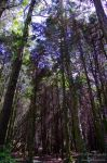 Trees_1 by P3droD