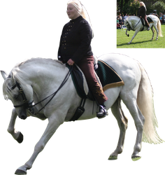white andalusian on a show precut by Nexu4
