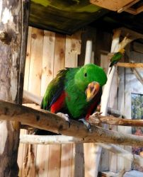 Parrot by Polin-Sam