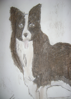 Border Collie (coal) by StarLilly08
