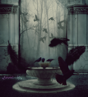 Crows by Ewariel
