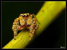 nice spider by Ofielkhul