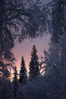 Enchanted Winter Evening by Line-of-Birds