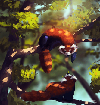 Red Pandas by Paloma-McClain