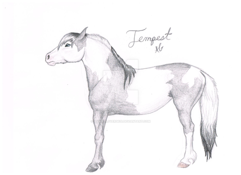Tempest (wingless) by animallover0629