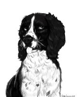 Jasper the Springer Spaniel Lineart by EmilyCammisa