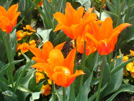 Longwood Gardens: 54 by jr----fave-resources