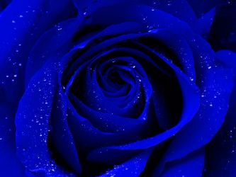 Blue and Beautiful by SaimGraphics