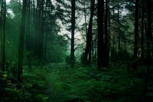 forest in the morning_1 by czochanska