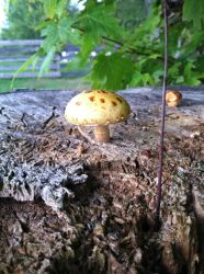 Little mushrooms by AnaturalBeauty
