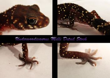 Thick Tail Gecko Detail Stock by DigitalissSTOCK