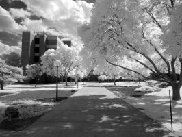 Infrared XXII by ilimel