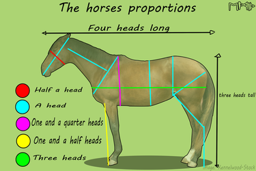The Horses Proportions by EdithSparrow