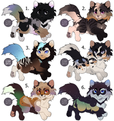 USD Flash Adopts - Fluffy Kittys ( CLOSED ) by gloomyguts