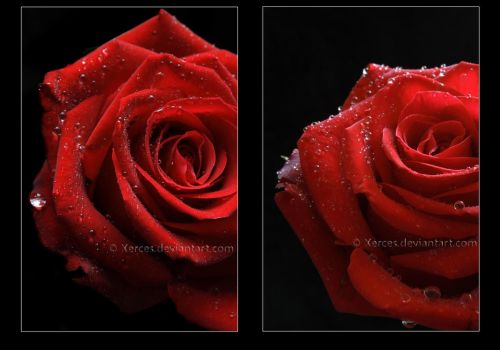 Passion And Lust Diptych by Xerces